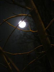 Moon beyond lamplit branches..