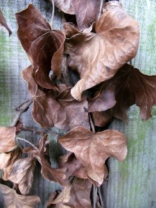...and some very autumnal-looking leaves.