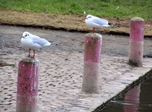 Two gulls...