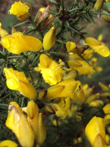 And finally, some err...bright yellow flowers :)...