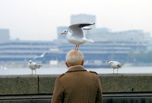 Man with a seagull on his head...