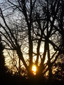 Setting sun, amidst trees, London N12