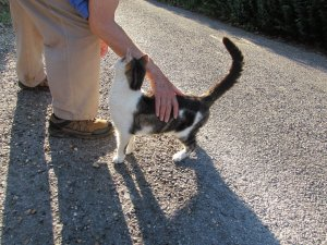 We also met a very friendly, and I think, elderly, she-cat on the way round...