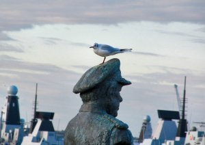 No respecter of reputations this gull, seated atop the statue of Lord Fieldhouse of Gosport, in Falklands Gardens on Gosport waterfront...