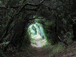 Or maybe 'Alice in Wonderland'...